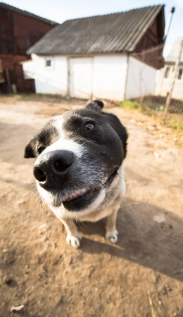 A dog with interest looks into the camera  Portrait with wide angle