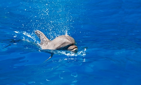 Dolphin splashes of sea water, indoors shot