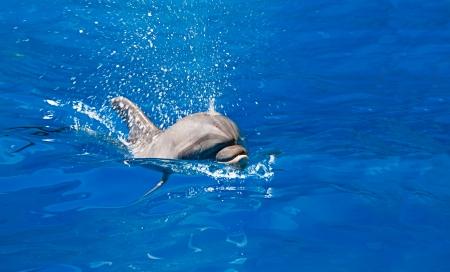 Dolphin splashes of sea water, indoors shot Stock Photo - 21495291