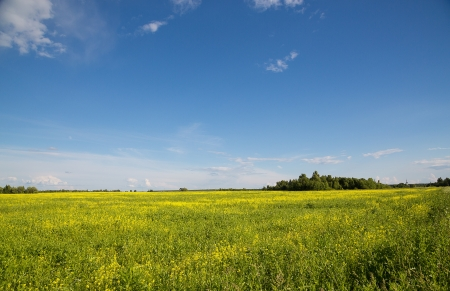 Landscape meadow with yellow flowers, soft lightning