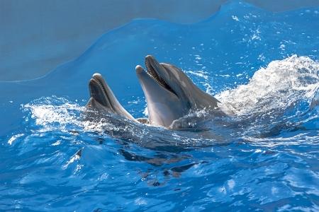 Delfinek úsznak a tengervíz, zárt lövés
