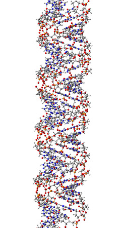 DNA molecule, structural fragment of A-form, 3D illustration Stock Illustration - 27282221