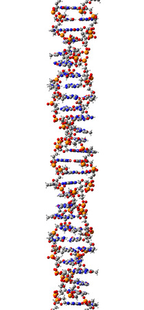 DNA molecule, structural fragment of Z-form, 3D illustration Stock Illustration - 27282224