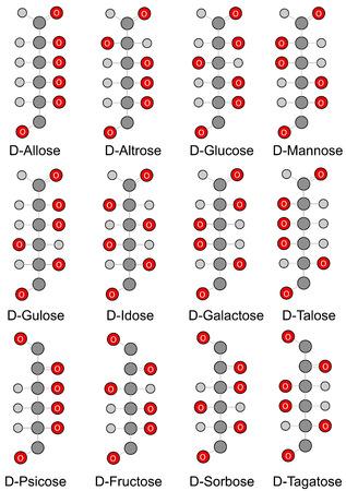 fruttosio: Aciclici formule di struttura di base di monosaccaridi esosi 2D Illustrazione isolato