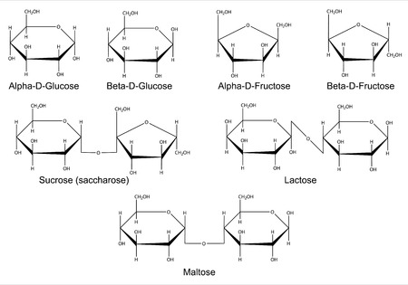 maltose: Structural formulas of the main cyclic monosaccharides and disaccharides  Isolated 2D Illustration