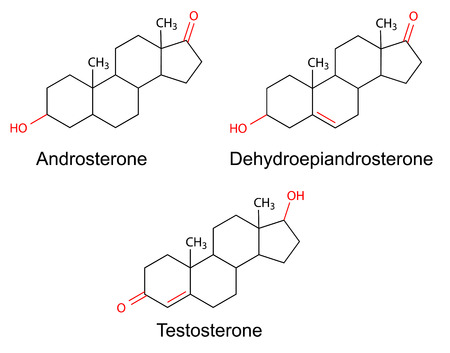 Structural formulas of male sex hormones  androsterone, dehydroepiandrosterone, testosterone  with marked variable fragments, 2D Illustration, vector Ilustração