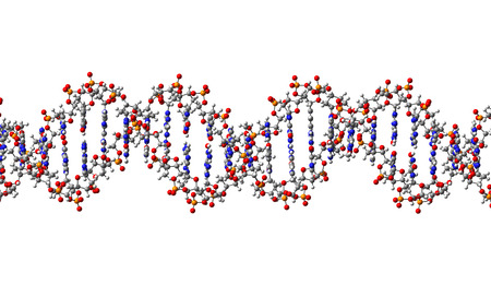 DNA molecule, structural fragment, 3D illustration Stock Illustration - 27538395