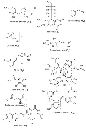 ascorbic: Chemical formulas of watersoluble vitamins, 2d illustration, vector, isolated on white