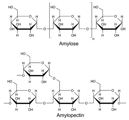 starch: Structural components of the starch  amylose, pectin  2D Illustration of chemical formulas, isolated on white Illustration