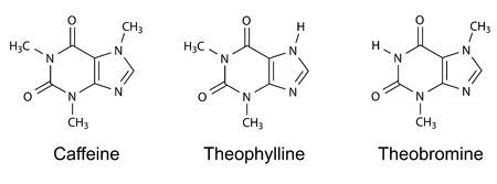 Szerkezeti kémiai képletek purin alkaloidok koffein, teofillin, teobromin, 2d ábra, vektor, elszigetelt, fehér Illusztráció