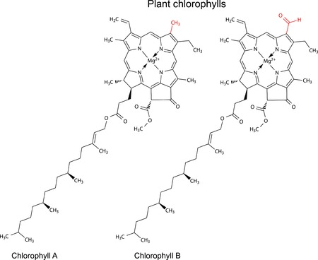 Structural chemical formulas of plant pigments chlorophylls with marked variable fragments, 2d illustration, vector, isolated on white background Çizim
