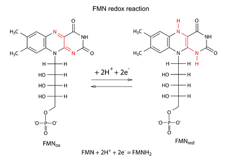 oxidation: Illustration of FMN redox reaction with chemical formulas, marked variable fragments, vector, isolated on white