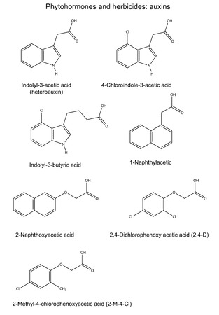 phytohormone: Structural chemical formulas of phytohormones and herbicides auxins, 2D illustration, vector, isolated on white