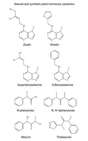 Structural chemical formulas of natural and synthetic plant hormones cytokinins, 2D Illustration, vector, isolated on white Illustration