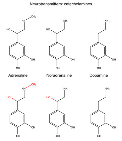 Structural chemical formulas of neurotransmitters  adrenaline, noradrenaline, dopamine  with marked variable fragments, 2d Illustration, vector, isolated on white background