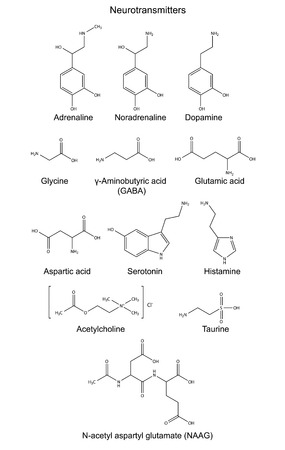 Structural chemical formulas of basic neurotransmitters  epinephrine, norepinephrine, dopamine, glycine, aminobutyric acid, glutamate, aspartate, serotonin, histamine, taurine, acetylcholine and acetylaspartylglutamate