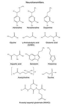 Szerkezeti kémiai képletek az alapvető neurotranszmitterek epinefrin, norepinefrin, dopamin, glicin, amino-vajsav, glutamát, aszpartát, szerotonin, hisztamin, taurin, acetil-kolin és acetylaspartylglutamate Illusztráció