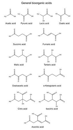 krebs: Structural chemical formulas of basic bioorganic acids   Illustration