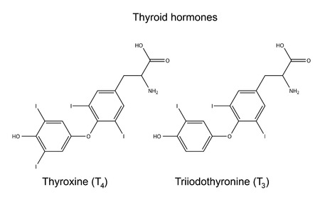 physiological: Structural chemical formulas of thyroid hormones  Illustration