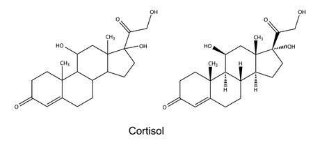 physiological: Structural chemical formulas of cortisol, 2D illustration, vector, isolated on white background
