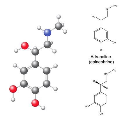 endogenous: Structural chemical formulas and model of adrenaline  epinephrine