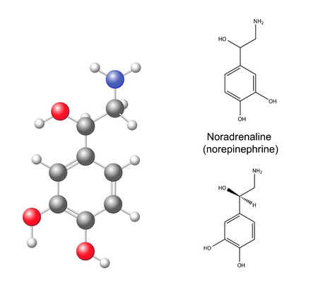 Structural chemical formulas and model of noradrenaline  norepinephrine