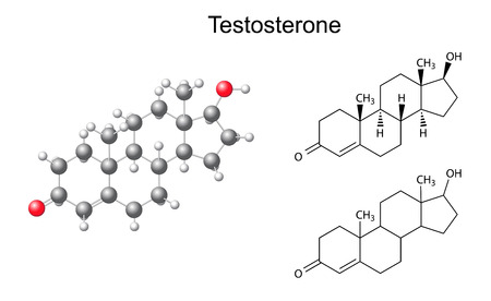 Structural chemical formulas and model of testosterone molecule, 2D and 3D Illustration Illustration