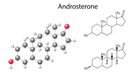 hormone  male: Structural chemical formulas and model of androsterone molecule