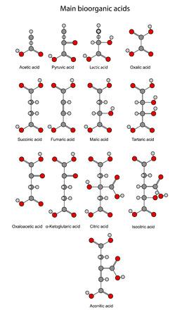 krebs: Chemical formulas of main bioorganic acids   Illustration