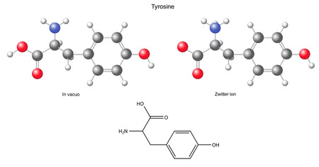 Tyrosine  Tyr  - chemical structural formula and models, amino acid, in vacuo, zwitterion, 2D and 3D illustration Vector