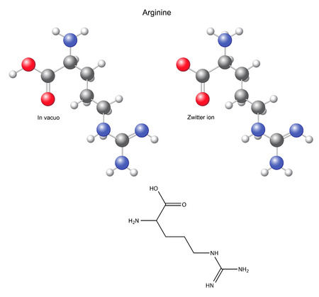 synthesis: Arginine  Arg  - chemical structural formula and models, amino acid, in vacuo, zwitterion, 2D and 3D illustration