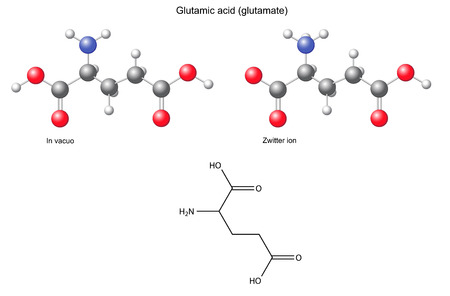 glutamate: Glutamic acid  Glu  - chemical structural formula and models, amino acid, in vacuo, zwitterion, 2D and 3D illustration
