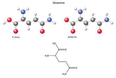 Glutamine  Gln  - chemical structural formula and models, amino acid, in vacuo, zwitterion, 2D and 3D illustration Vector