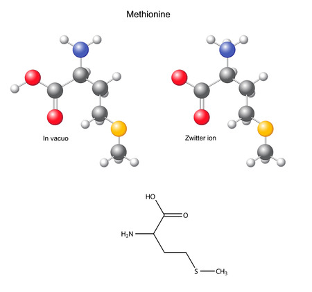 Methionine  Met  - chemical structural formula and models, amino acid, in vacuo, zwitterion, 2D and 3D illustration Vector