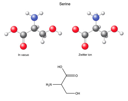serine: Serine  Ser  - chemical structural formula and models, amino acid, in vacuo, zwitterion, 2D and 3D illustration Illustration