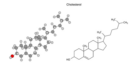 Structural chemical formulas of cholesterol molecule Vector