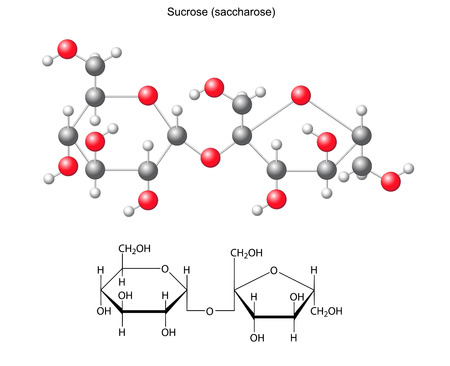 sucrose: Structural chemical formula and model of sucrose  saccharose Illustration