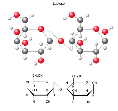 acyclic: Structural chemical formula and model of  lactose