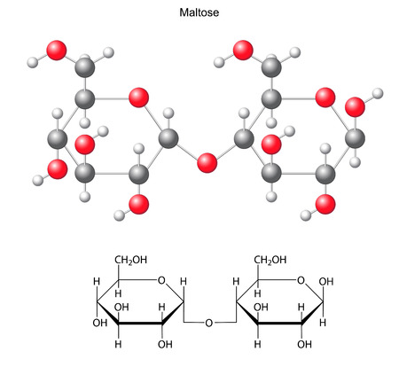 maltose: Structural chemical formula and model of maltose