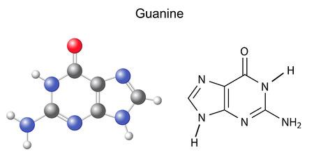 guanine: Chemical structural formula and model of guanine  DNA and RNA nitrogen base  Illustration