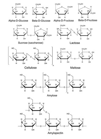 Chemical structural formulas of basic carbohydrates  glucose, fructose, sucrose,  lactose, maltose, cellulose, starch , 2D illustration, vector, isolated on white background