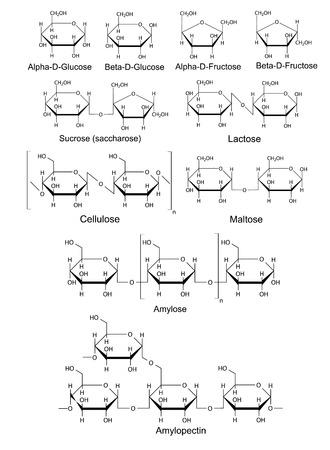 fruttosio: Formule di struttura chimica dei carboidrati glucosio di base, fruttosio, saccarosio, lattosio, maltosio, cellulosa, amido, illustrazione 2D, vettore, isolato su sfondo bianco
