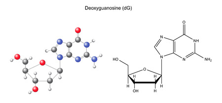 sugar metabolism: Structural chemical formula and model of deoxyguanosine, 2D and 3D illustration, isolated on white background Illustration