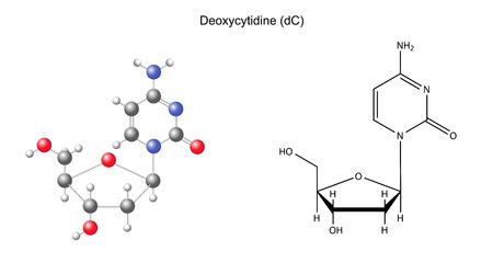 monomer: F�rmula qu�mica estructural y el modelo de desoxicitidina, 2D y 3D ilustraci�n, aislado en fondo blanco
