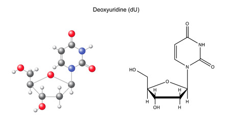 uracil: Structural chemical formula and model of deoxyuridine, 2D and 3D illustration, isolated on white background Illustration