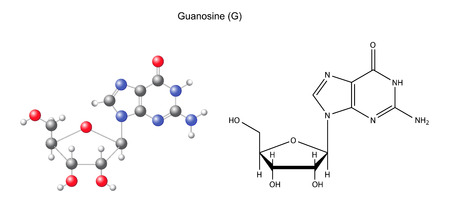 Structural chemical formula and model of guanosine, 2D and 3D illustration, isolated on white background