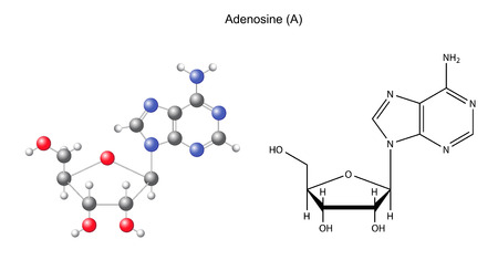 Structural chemical formula and model of adenosine, 2D and 3D illustration, isolated on white background Ilustrace