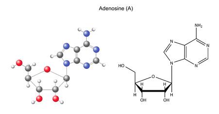 Szerkezeti Kémiai képlet és a modell adenozin, 2D és 3D illusztráció, elszigetelt fehér háttér Illusztráció