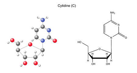 Structural chemical formula and model of cytidine, 2D and 3D illustration, isolated on white background