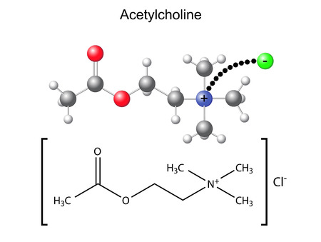 acetylcholine: Structural chemical formula and model of acetylcholine with chloride ion, 2D   3D Illustration, isolated on white background Illustration